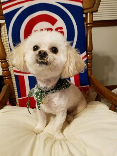 wrigley dog
