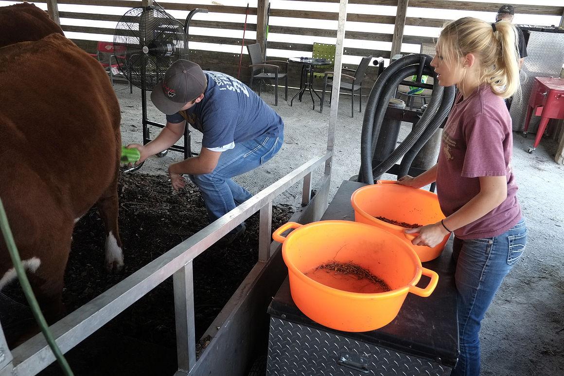 Illinois will county peotone - Will County Fair