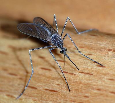 Kankakee County: West Nile virus detected (copy)