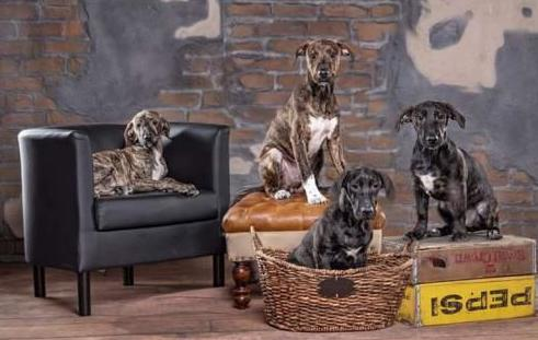 icare puppy group