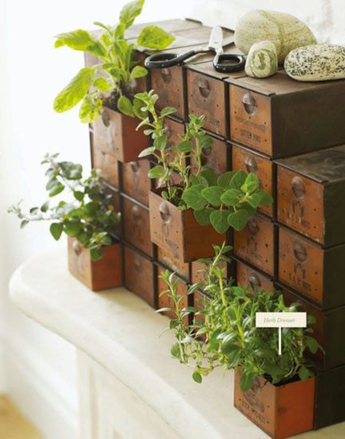 Bring a mini garden indoors this