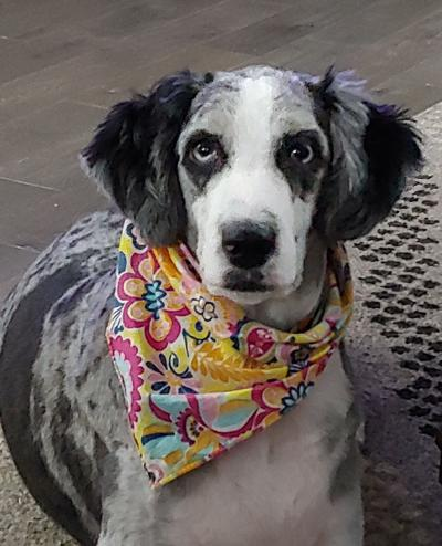 Pet of the Week - Lucy Blue --