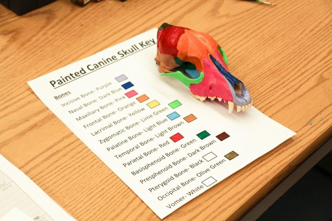 BBCHS grad creates colorful veterinary tool | Local News | daily ...