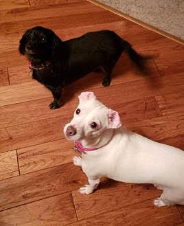 Pet of the Week - Remington and Mazie