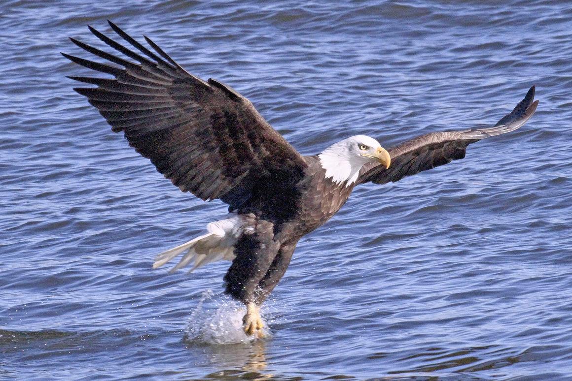 El invierno es para los pájaros | Noticias Locales | daily-journal.com