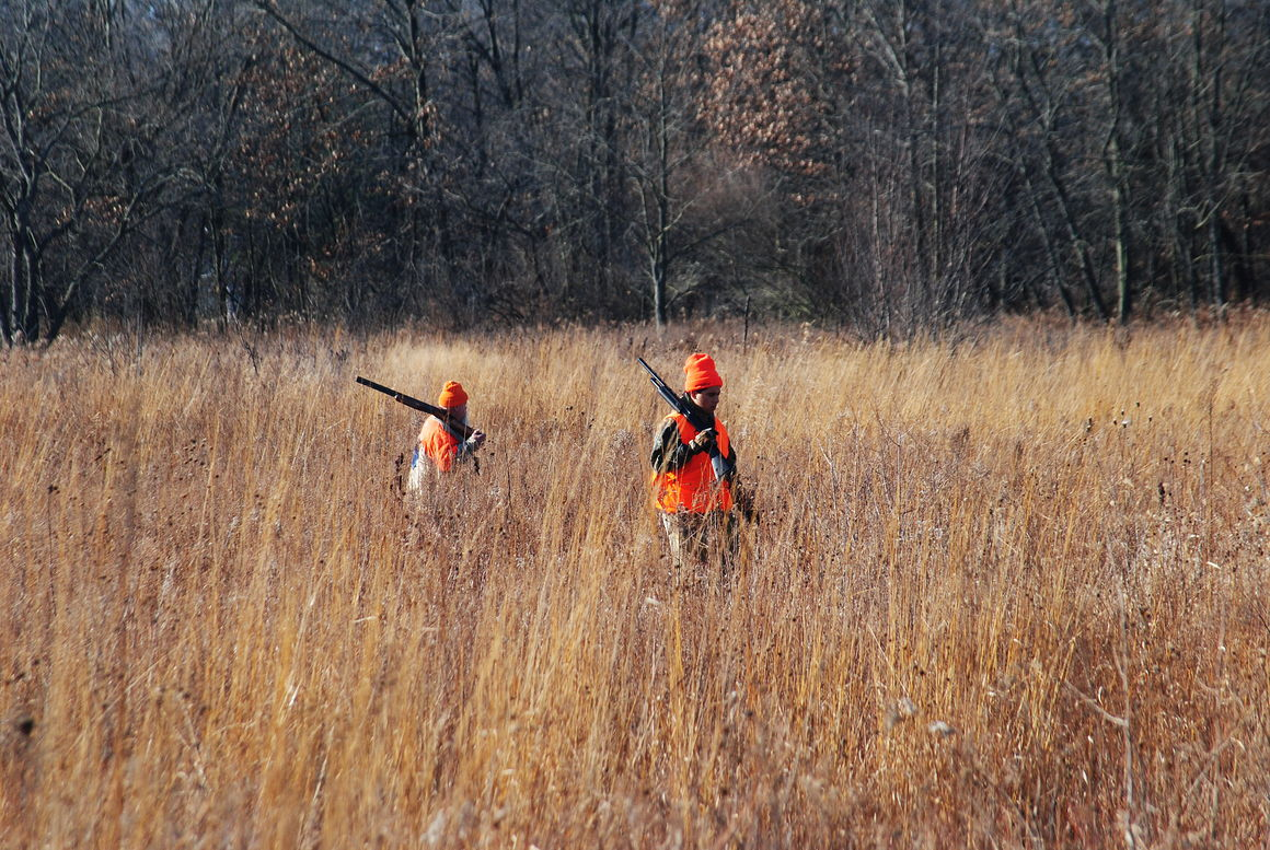 pheasant hunting pictures - HD 1160×777