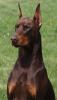 bigreddog