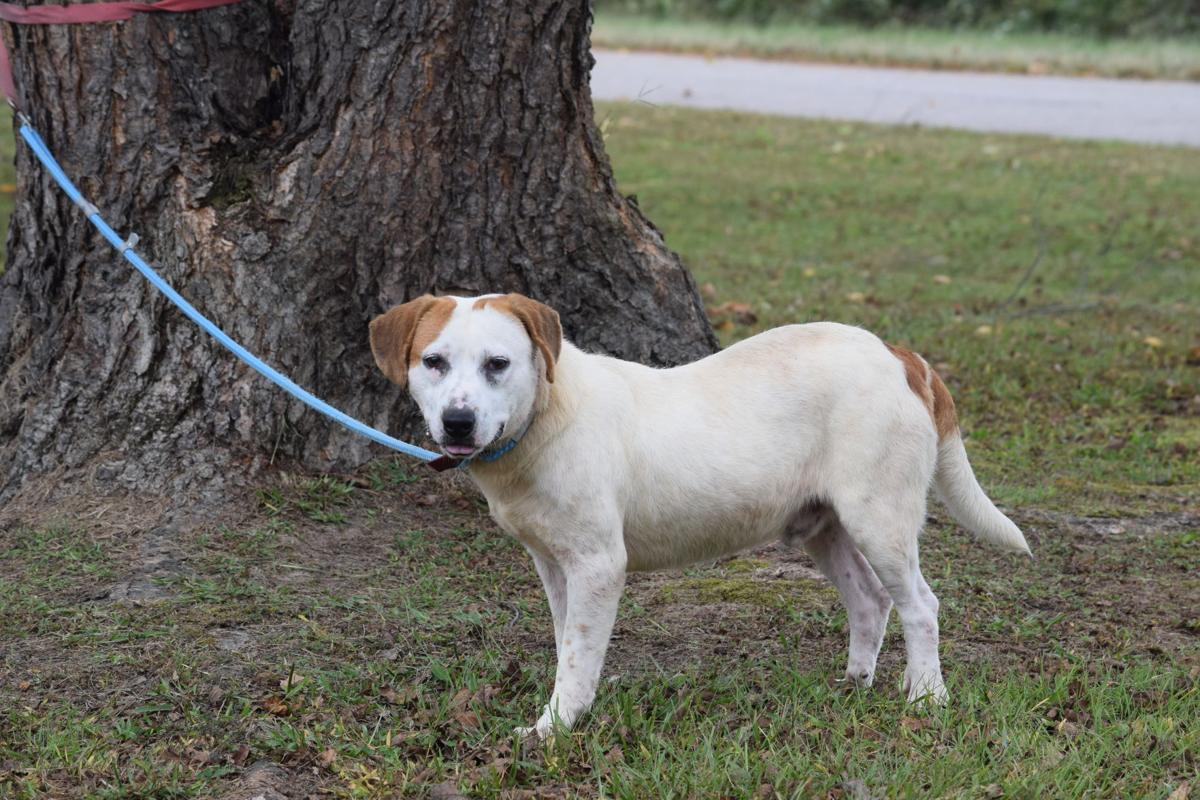 Pet of the Week -- Max
