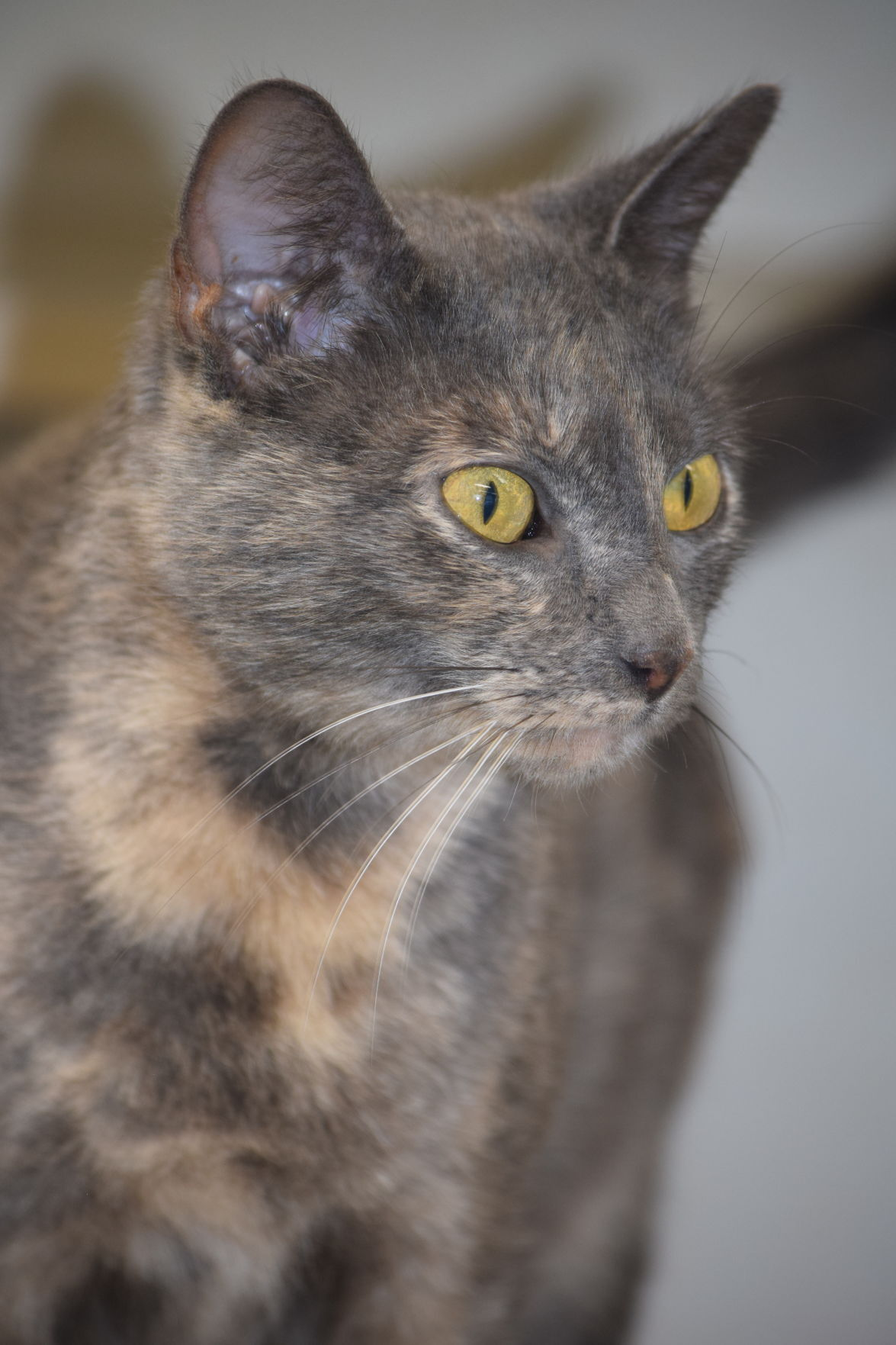 Pets of the Week -- Dorothy
