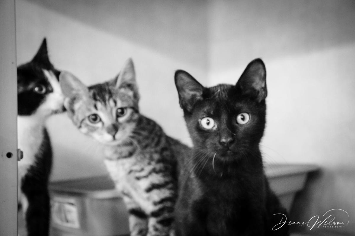 triC_Kittens.jpg
