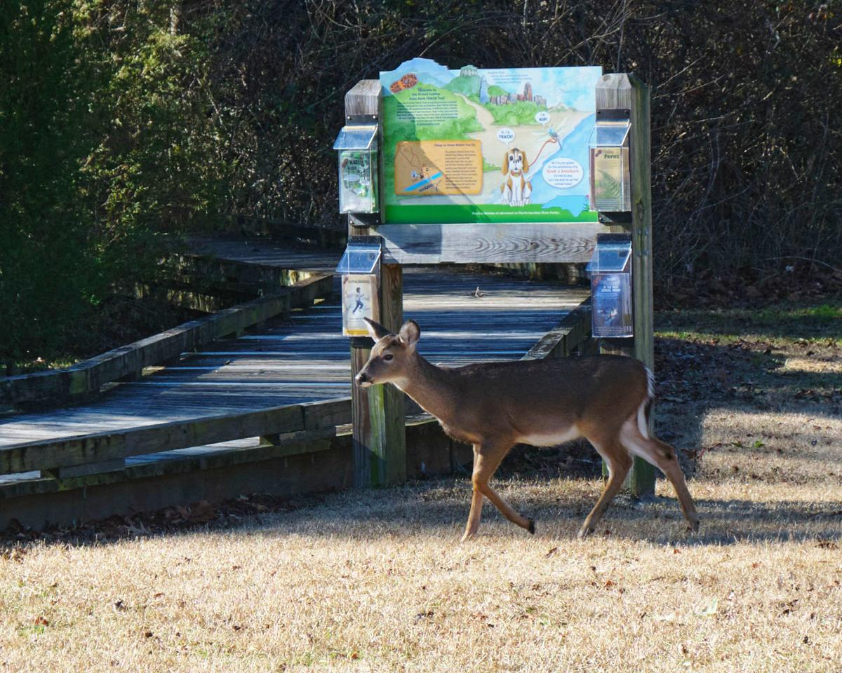 dismal swamp state park photo from Saturday, dec. 26