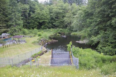 Fishhawk Dam