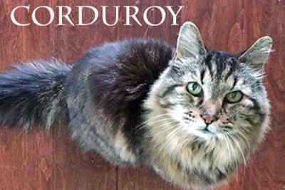 Corduroy reigns