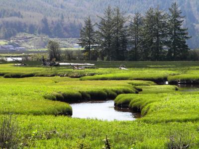 Botts Marsh in Nehalem Bay