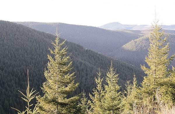 Class certification raises stakes in Oregon forest lawsuit