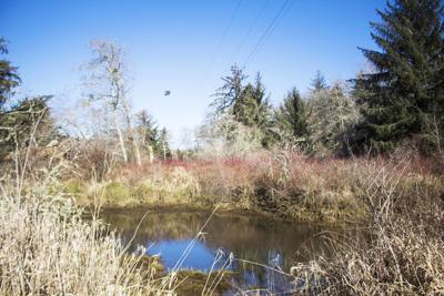 New Klaskanine River boat ramp complicated by diking