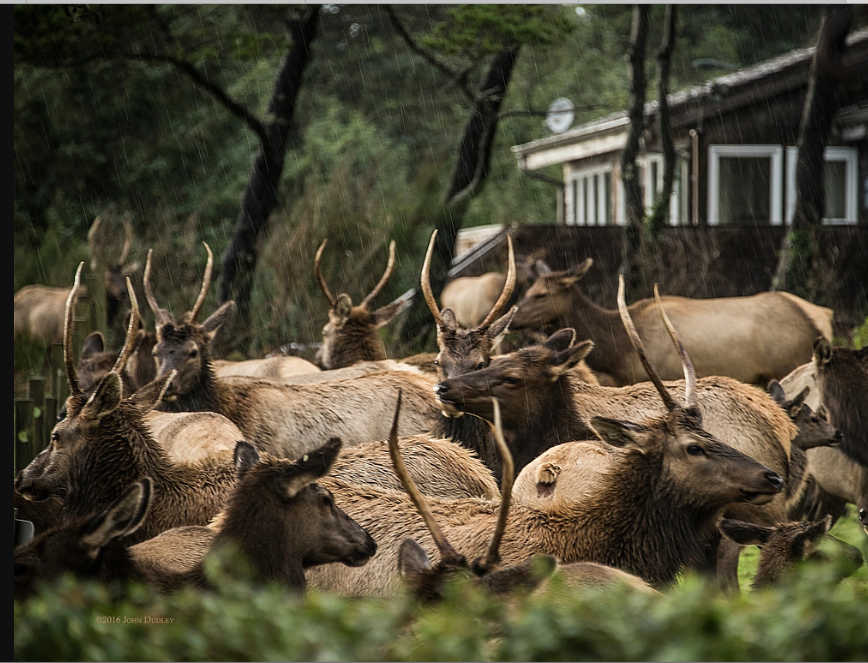 Close encounters of the elk kind