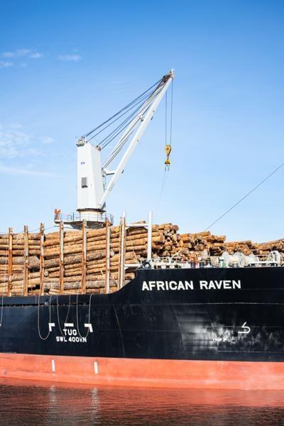 African Raven