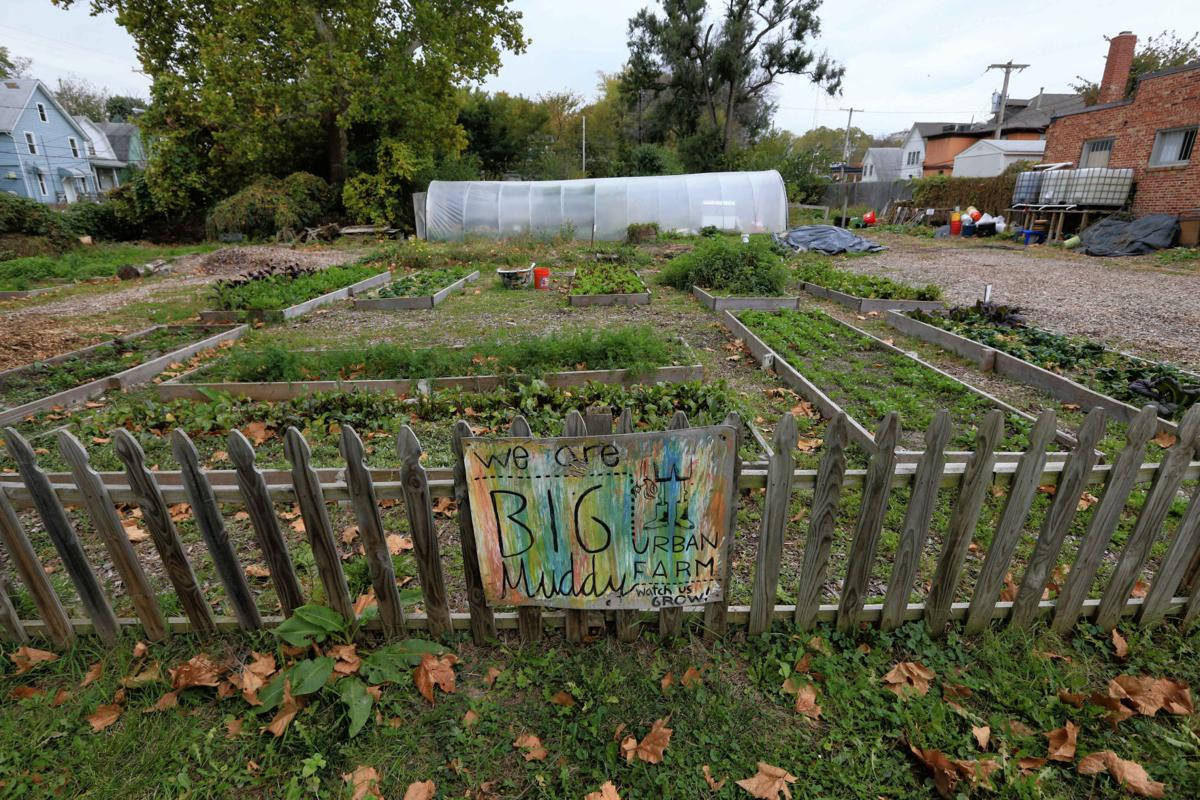 Urban farmers find that success can lead to eviction