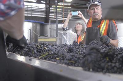 Oregon wineries, food processors oppose proposed work week limit