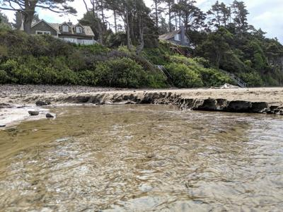 Arcadia Beach homes below proposed timber harvest