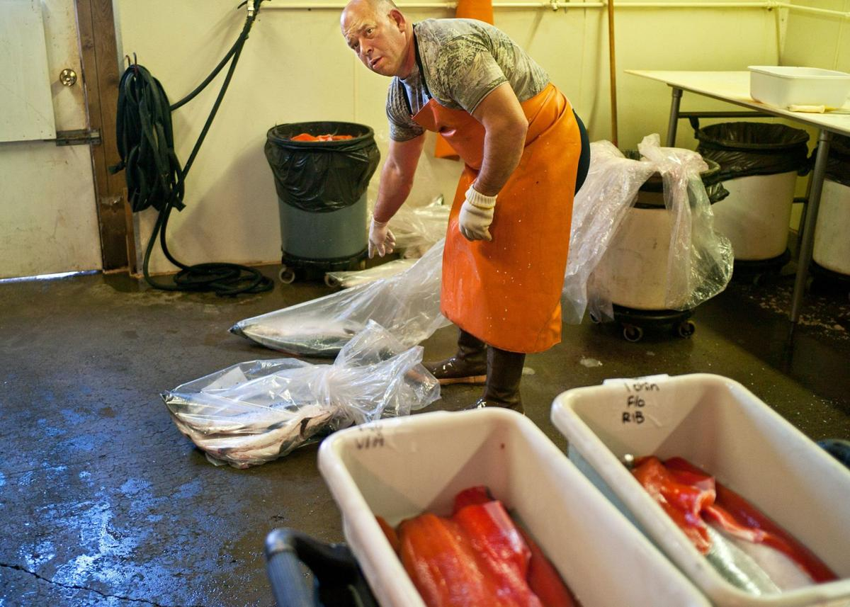 Salmon burst back