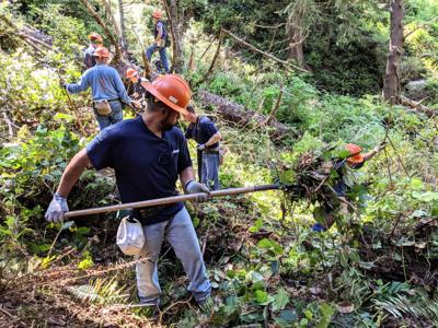Work crew clears brush on new trail route at Ecola State Park