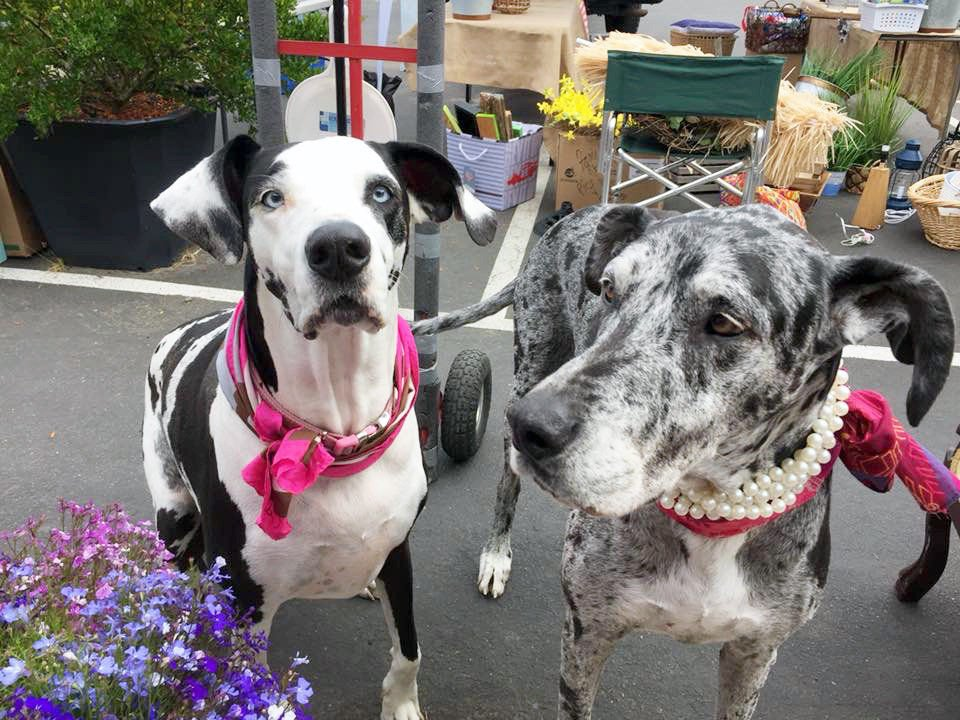 Going to the Dogs Pooches fill our lives with fur, fun, love … and muddy paws