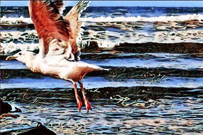 Ear: Gulls