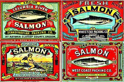 Ear: Salmon