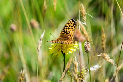 Zoo releases last summer batch of threatened butterflies