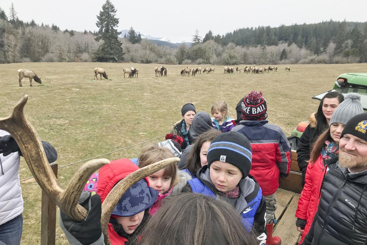 Elk Feeding 1.jpg