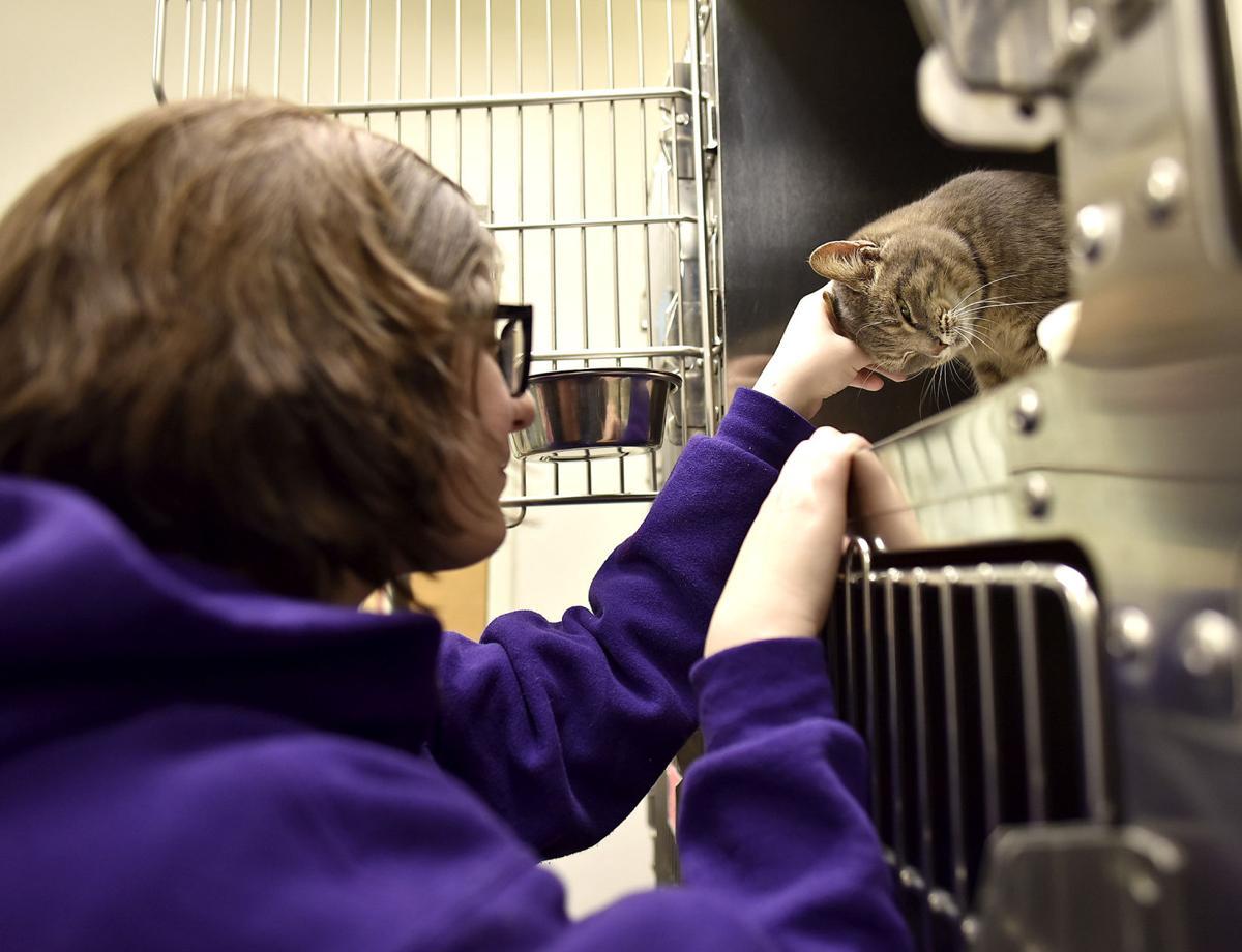 Volunteers make it happen at animal shelter