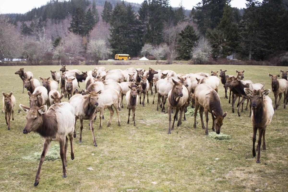 Elk Feeding 3.jpg