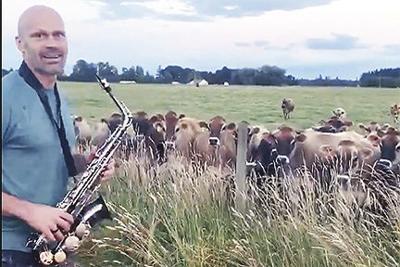 Ear: Cows