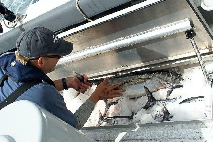 Redefining the fresh fish market
