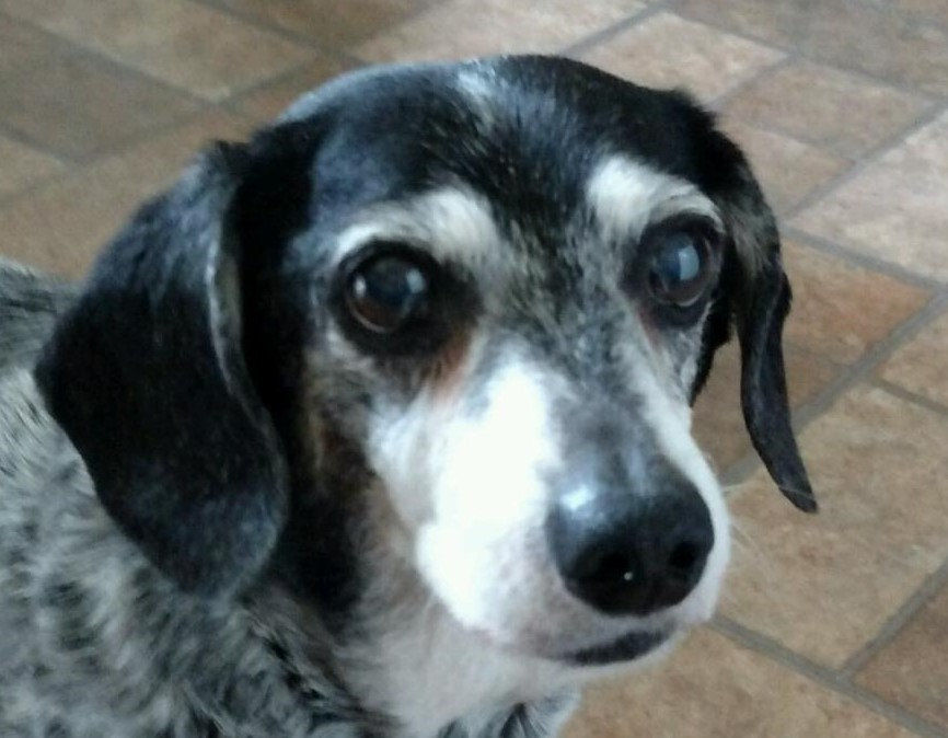 A promise made, a promise kept to save senior dogs