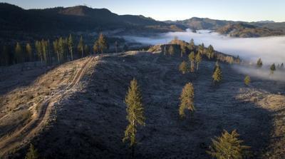 Timber tax cuts