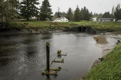 Warrenton may pursue dam study