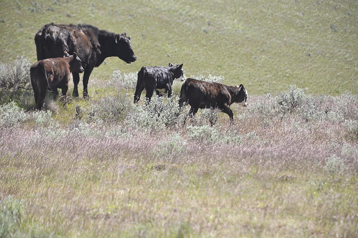 For sale: When Oregon farm, ranch lands change hands