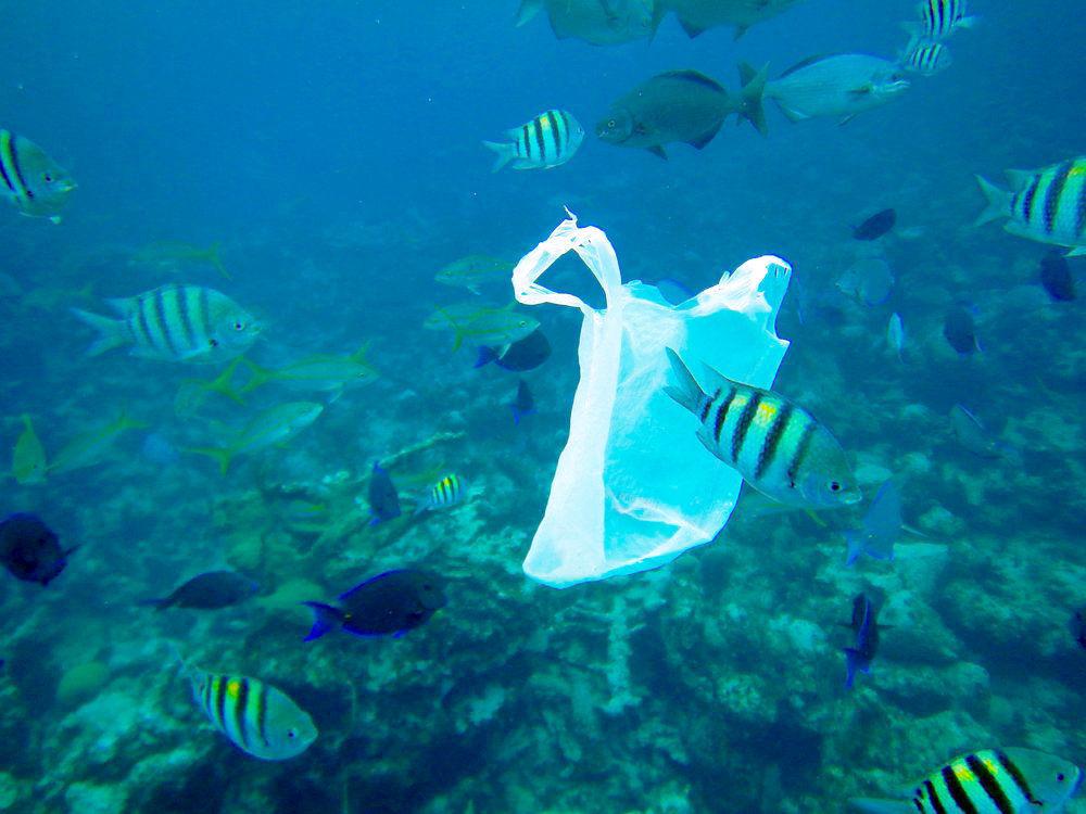 Astoria considers ban on plastic bags