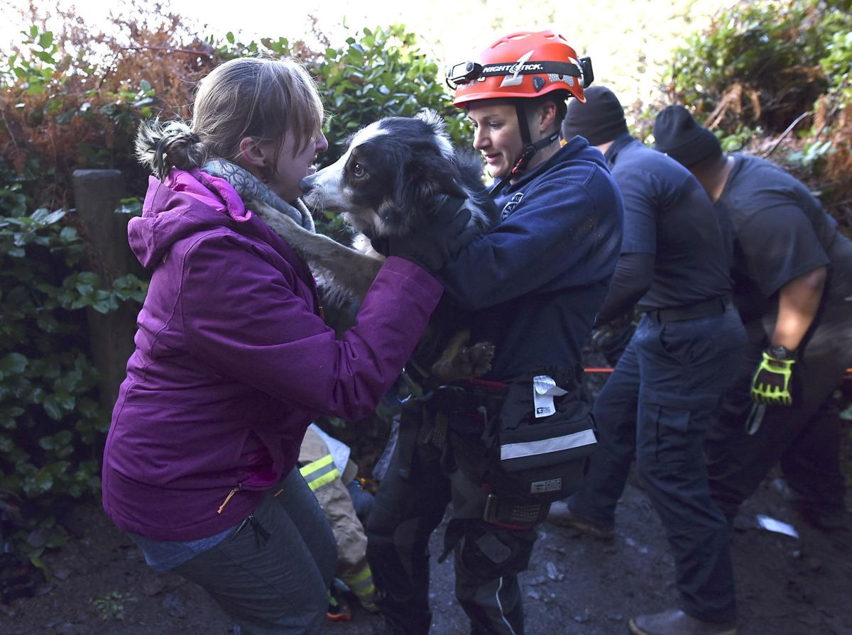 Dog rescued from cliff by Indian Beach