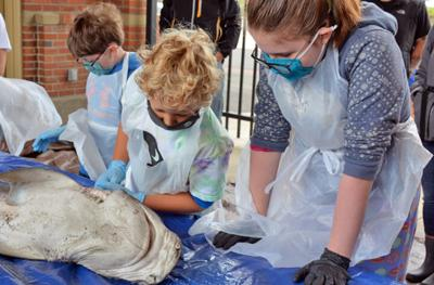 Students dissect sharks