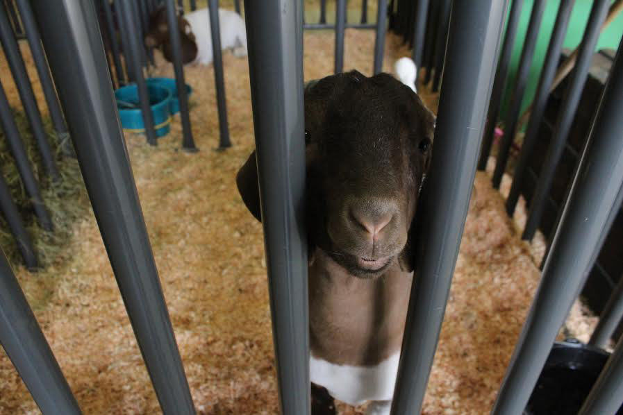 County fair opens with new attractions