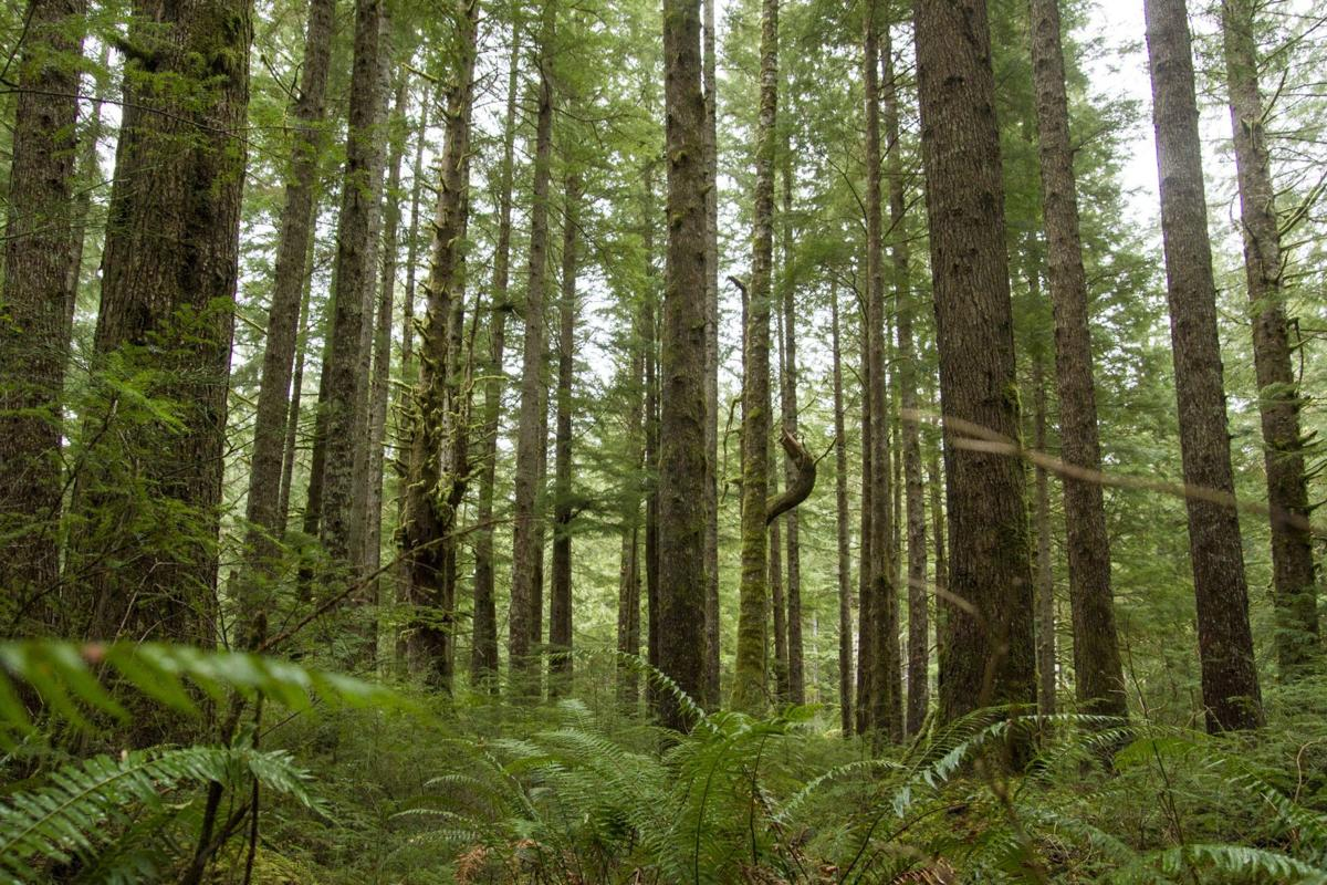 Carbon credits: Astoria sees forest through trees