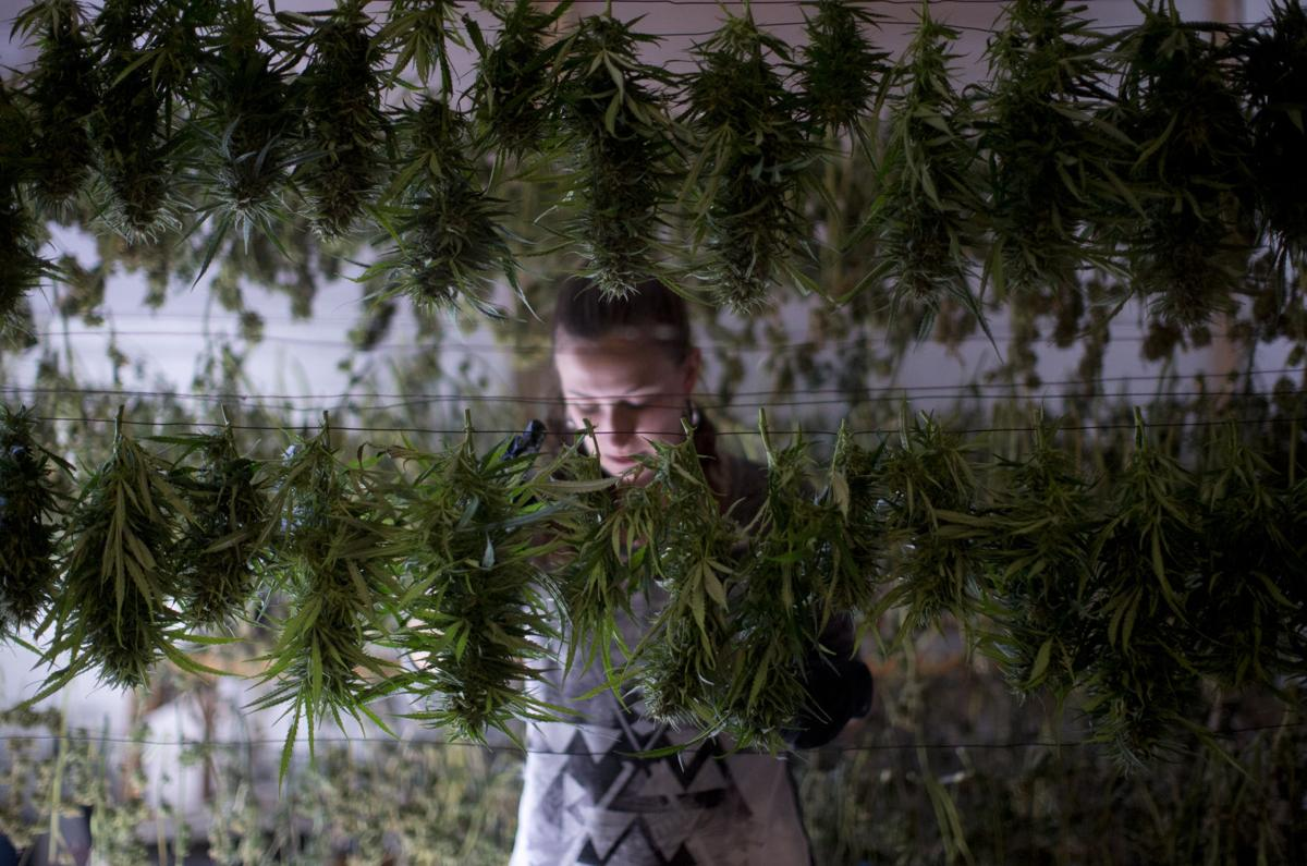 Legal pot brings business our way