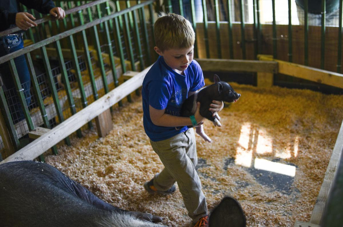 County fair: critters, carnies, caramel corn