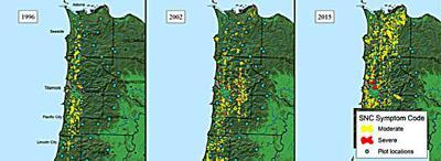 Costly fir disease threatens our coastal economy