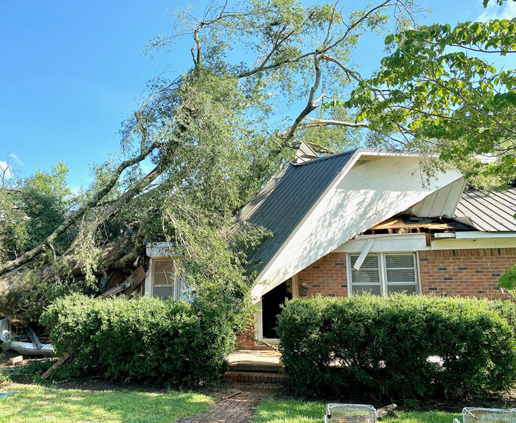 Photo #2 Tree on House
