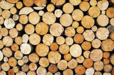 Sterling: Oregon counties lumber lawsuit is counterproductive